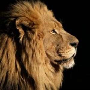 LION 512x 512