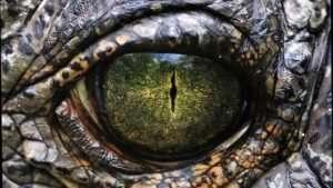 Serpent Eye 1