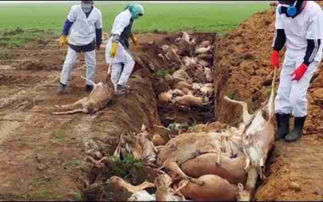 Dead Animals 1