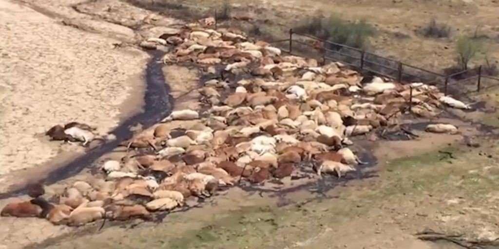 Dead Cattle 1