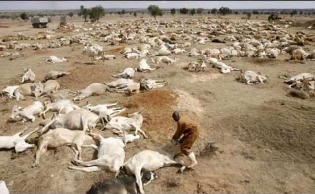 Dead Cattle 2