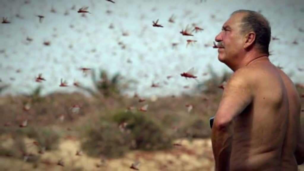 Egyptian Man And Locust