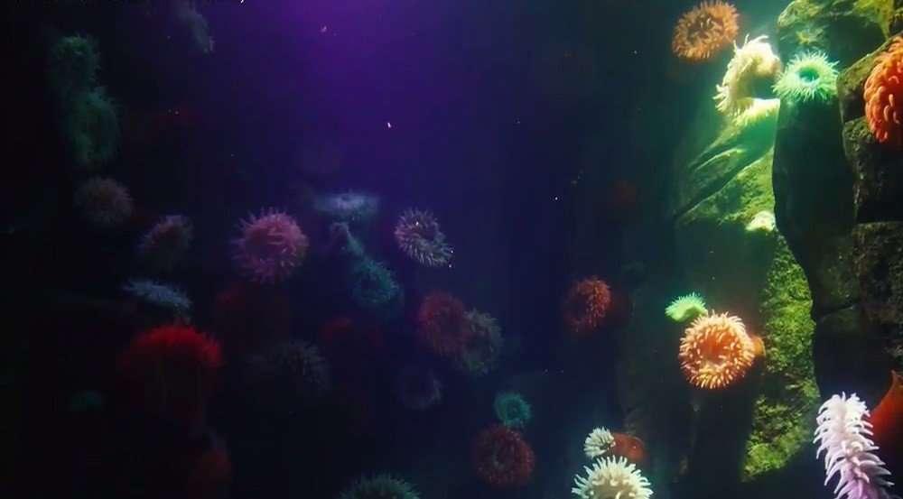 OceanLife11