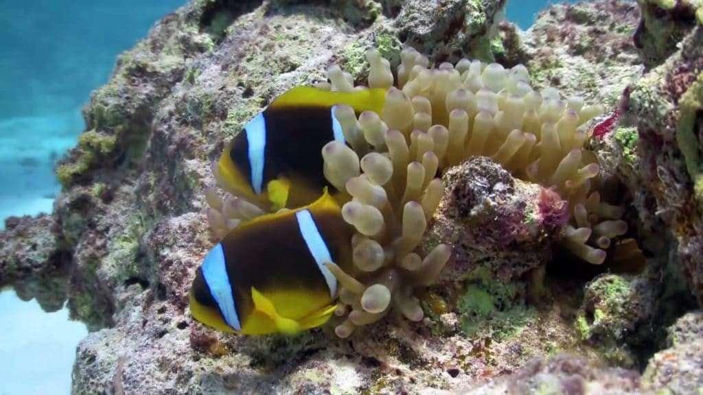 OceanLife2