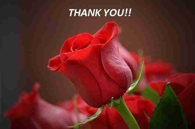 Thank You flowers1