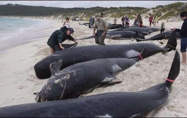 Black Dead Whales