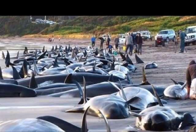 Black Dead Whales2