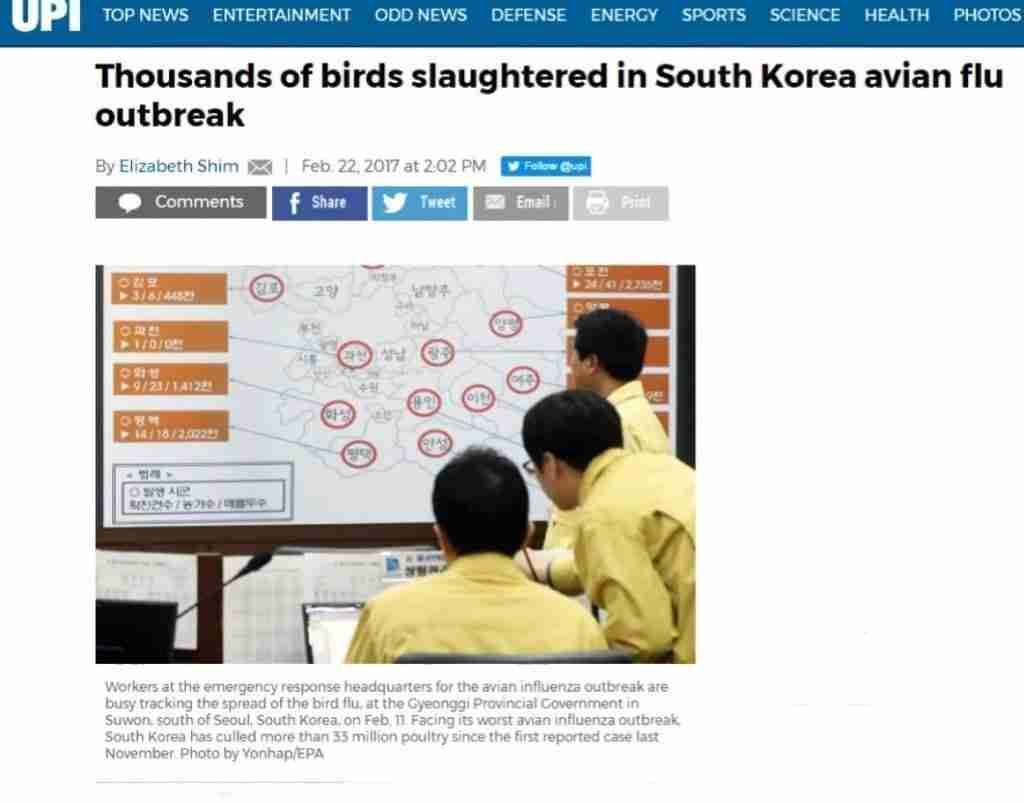 Dead Birds 3