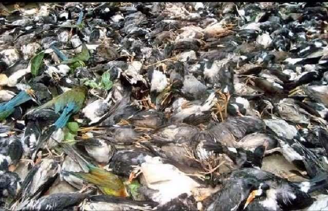 Dead Birds2
