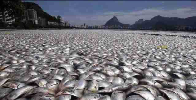 Dead Fish 1