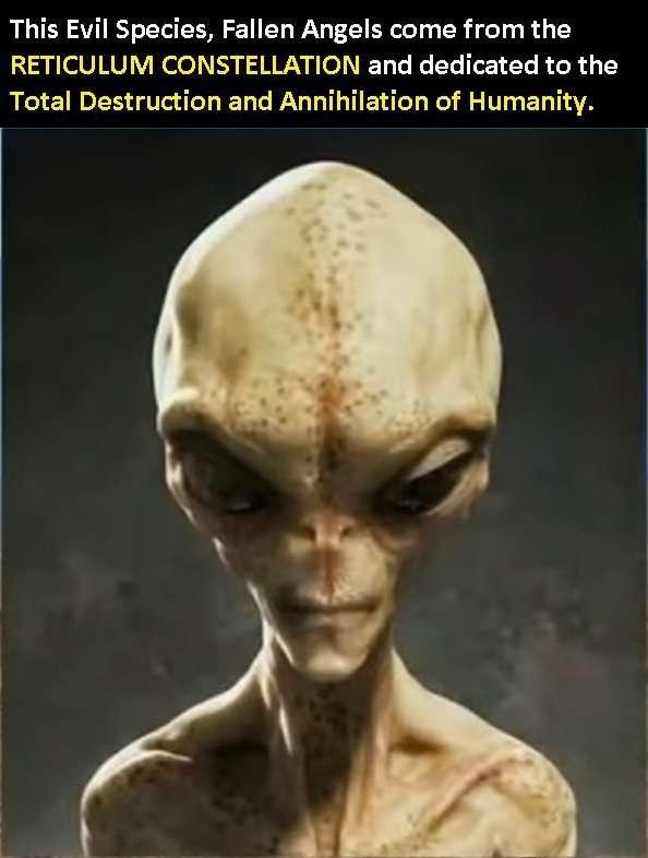 Alien Reticulum